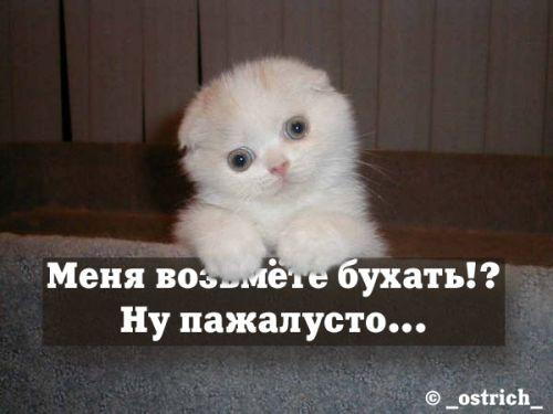 http://hohotyn.com/alko/17.jpg