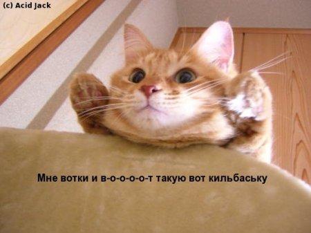 """Магазин WINX аватаров """"Бз-з-з..."""" Открытие!"""