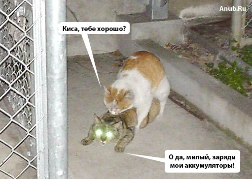 коты трахаются фото
